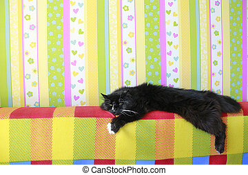 Lazy black cat laying on colored back of sofa. Black and...