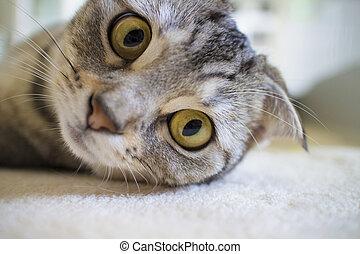 lazy cat looking at camera