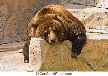 Lazy Day at the Zoo - Grizzly bear laying over a rock on a...