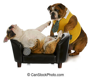 lazy dog - english bulldog standing trying to wake up another laying on couch