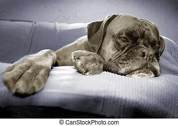 dog - Lazy dog