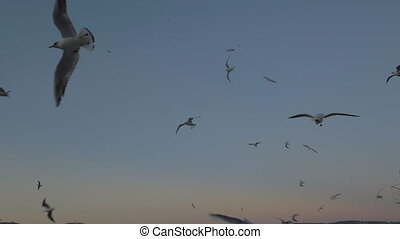 A lot of seagulls, slowly floating around and getting rather close to the camera