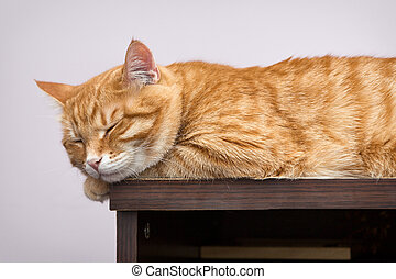 Lazy orange cat sleeping on the bookcase