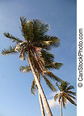 Lazy Palm Trees in Tropical Hot Climate