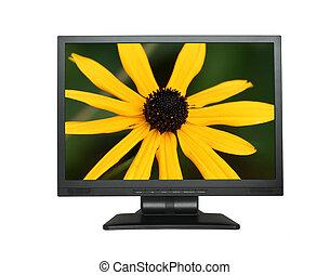 lcd, fleur, écran, magnifique