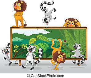 Leão, esquilos, tábua