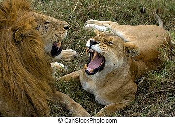 leão, luta