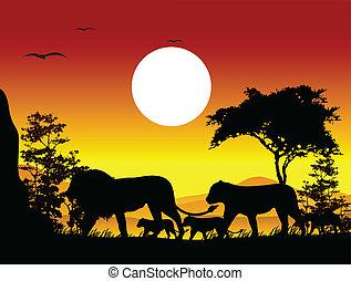 leão, silueta, viagem, beleza