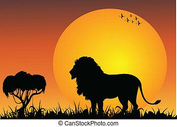león, africano, sabana
