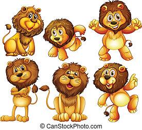 león, conjunto