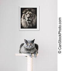 león, imagen, ahorcadura, sobre, colocar, cat.