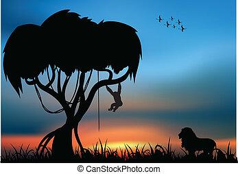 león, mono savanna, africano