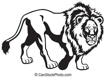 león, negro, blanco
