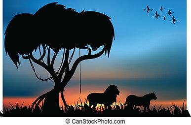 león, sabana, leona, africano