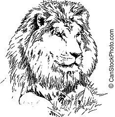 león, yacer césped