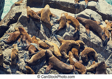 leões, mar