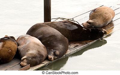 leões, mar, dormir
