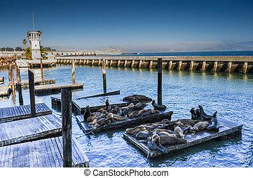 leões marinhos, em, a, docas, de, cais, 39