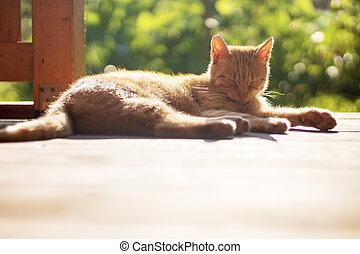 ležící, šmrc devítiocasá kočka, mimo, terasa, ostatní
