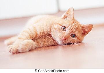 ležící, pobídka, dno, kotě, šikovný