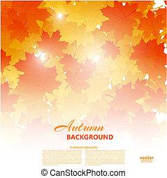 le, amarela, outono, tema, fundo, laranja, queda, maple