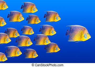 Leader - Big fish leading others