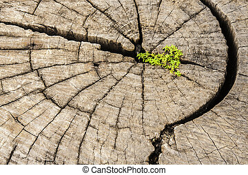 Leadership success and hope concept.Strong seed growing on...