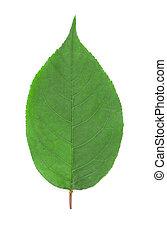 leaf., さくらんぼ