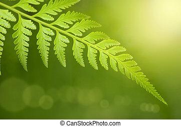 leaf., 녹색