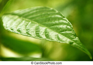 A green leaf suitable for a shallow depth of field background.