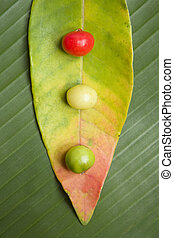Leaf and Berry Still Life