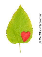 leaf and heart