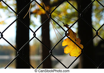 leaf and needles on the fence