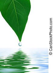 Leaf and water drop