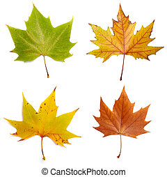 leaf autumn fall seasonal nature - collection of yellow ...