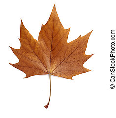 leaf autumn fall seasonal nature
