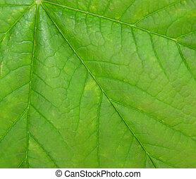 Macro shot of a leaf