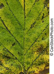 leaf background XXL file
