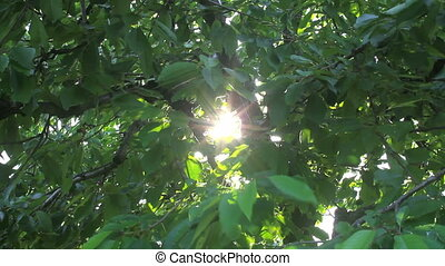leaf beam