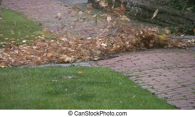 Man with leaf blower cleans up autumn leaves.