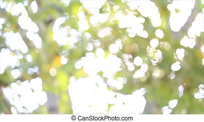 leaf blurred shining background