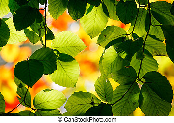 leaf - Bright green leaves on the branches in the autumn...