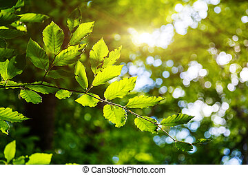leaf - Bright green leaves on the branches in the forest....