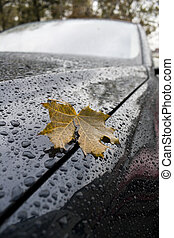 Leaf by the car