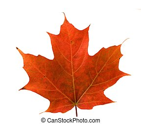 leaf-close, su, acero, rosso