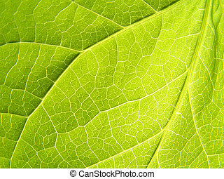 Leaf: Close up - A Close up of leaf taken under bright sun
