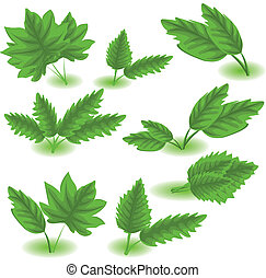 Leaf collection isolated on white -