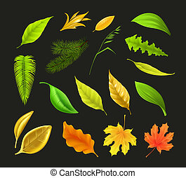 Leaf collection, on black vector