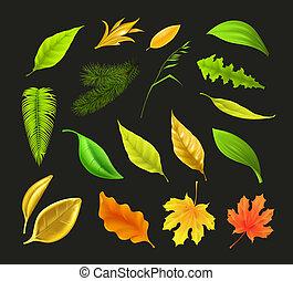 Leaf collection, on black vector