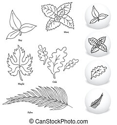 Leaf Drawing Set